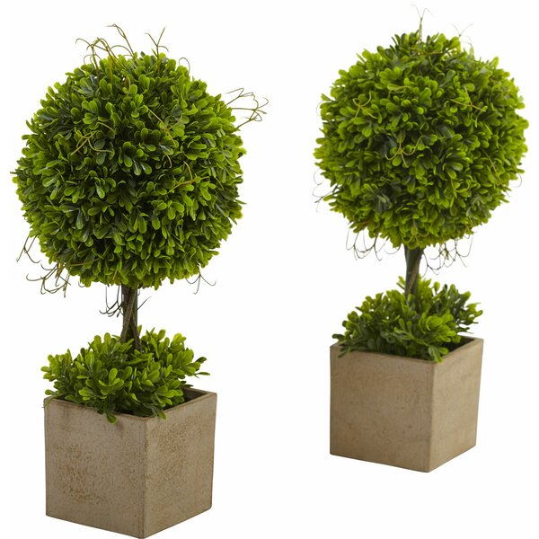Boxwood Round Topiary in Planter (Set of 2) by Lark Manor