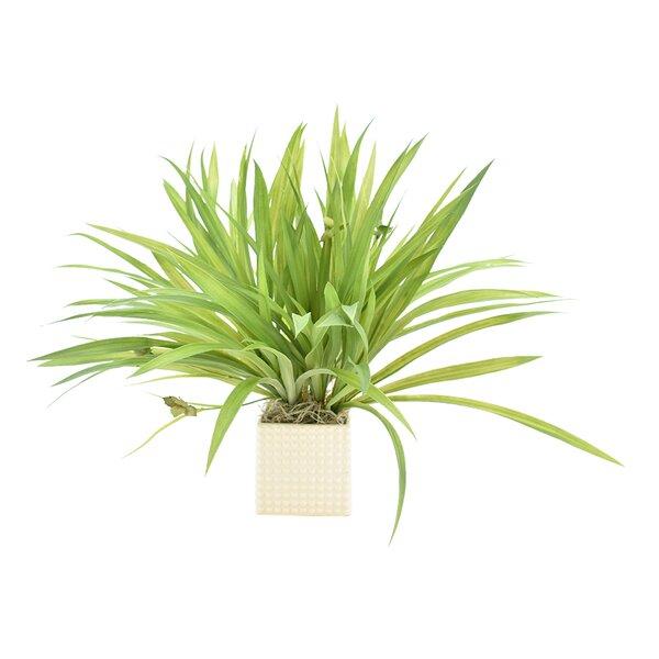 Natural Looking Grass Arrangement by Latitude Run