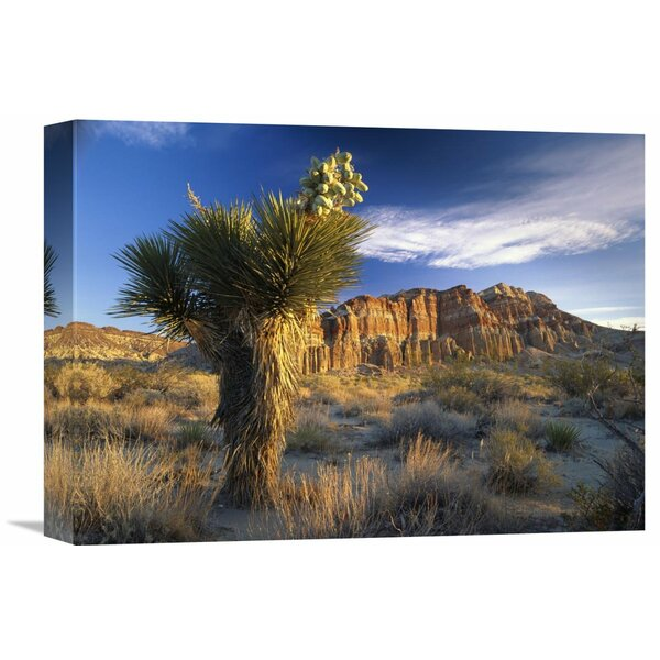 Nature Photographs Joshua Tree at Rock State Park, California by Tim Fitzharris Photographic Print on Canvas by Global Gallery