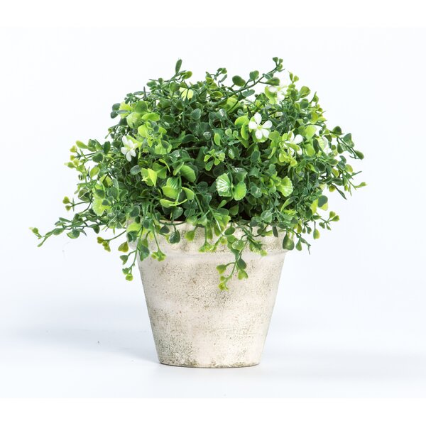 Flowering Plant in Pot (Set of 2) by August Grove