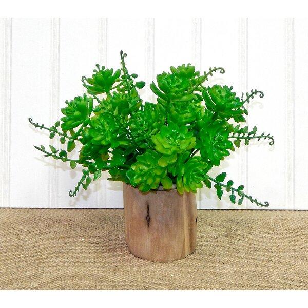 Garden Desktop Succulent Plant in Decorative Vase by Gracie Oaks