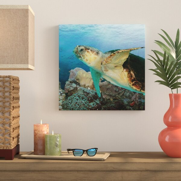Sea Turtle II Graphic Art on Wrapped Canvas by Bay Isle Home