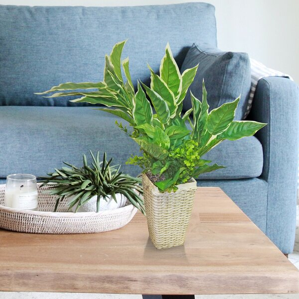 Mixed Hasta Floor Foliage Plant in Basket by Charlton Home