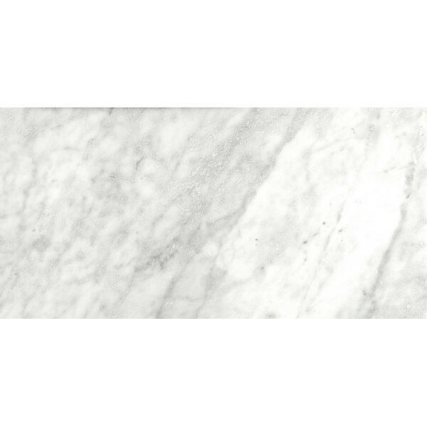 Marble 12 x 24 Field Tile in Bianco Gioia