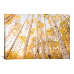 'Colorado' Photographic Print by East Urban Home