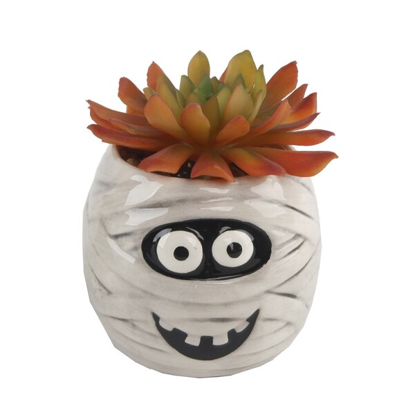Desktop Faux Succulent Plant in Ceramic Mummy Pot