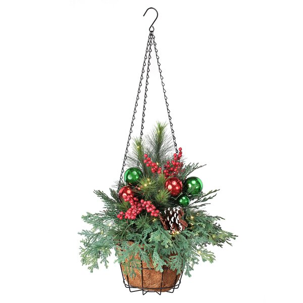 Foliage Plant in Basket by The Holiday Aisle