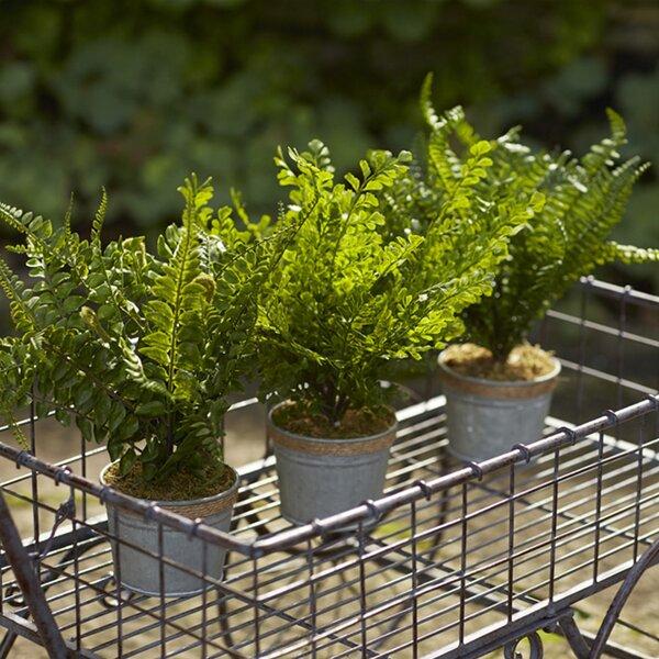 Faux Fern Plant in Pot (Set of 3) by Melrose International