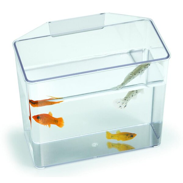 Aquarium Specimen Container Tank by Lees Aquarium & Pet