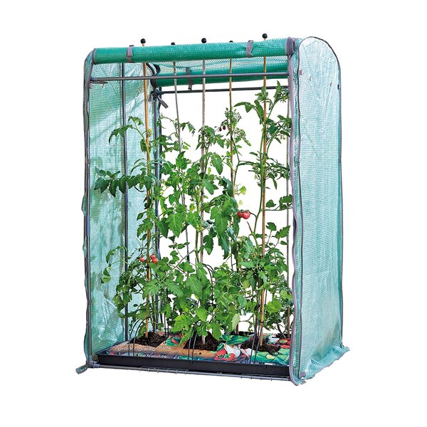 3.29 Ft. W x 2.63 Ft. D Mini Greenhouse by Pier Surplus