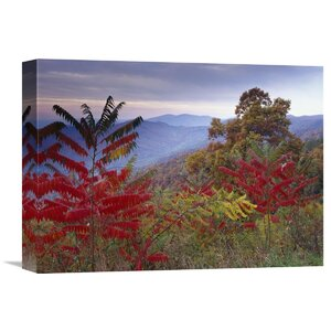 Nature Photographs Staghorn Sumac in Autumn Blue Ridge Mountain Range Virginia by Tim Fitzharris Photographic Print o... by Global Gallery