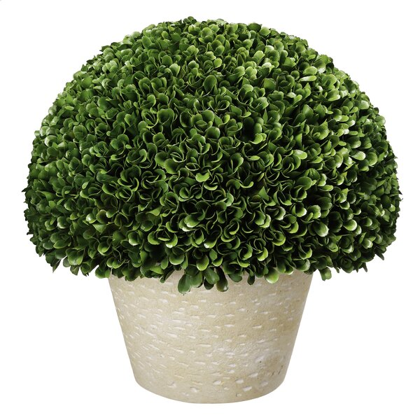 Desktop Boxwood Topiary in Planter by Darby Home Co