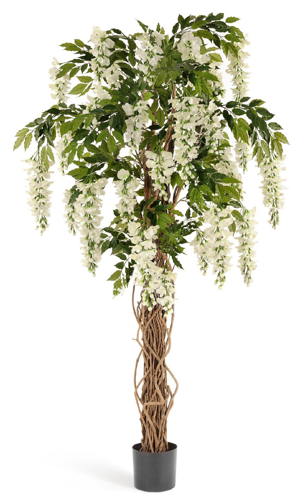 Gracie Oaks Multi Vine Trunk Wisteria Silk Flowering Tree In Pot