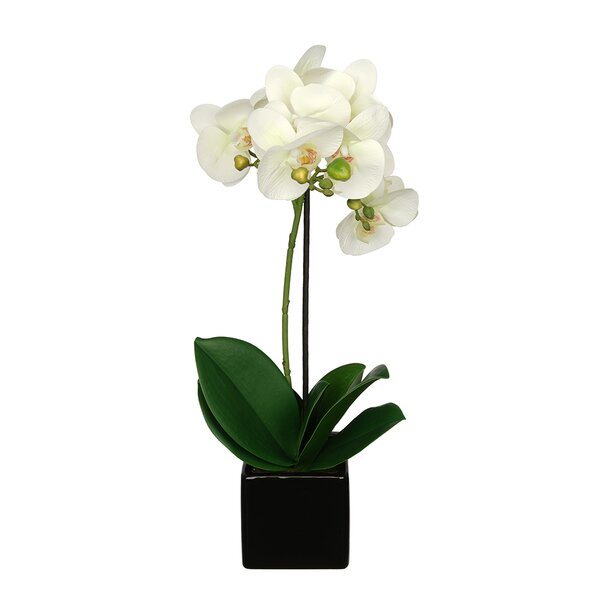 Artificial Baby Cube Ceramic Orchid Flowers in Pot (Set of 2) by House of Silk Flowers Inc.