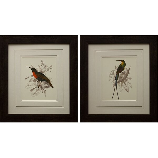 Jardine Hummingbird III & IV Framed Graphic Art Print by Star Creations