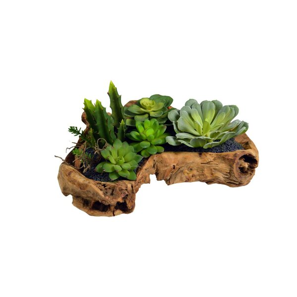 Desktop Succulent Plant in Planter by Union Rustic