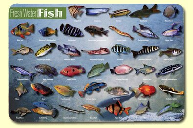 Freshwater Fish Placemat (Set of 4) by Painless Learning Placemats