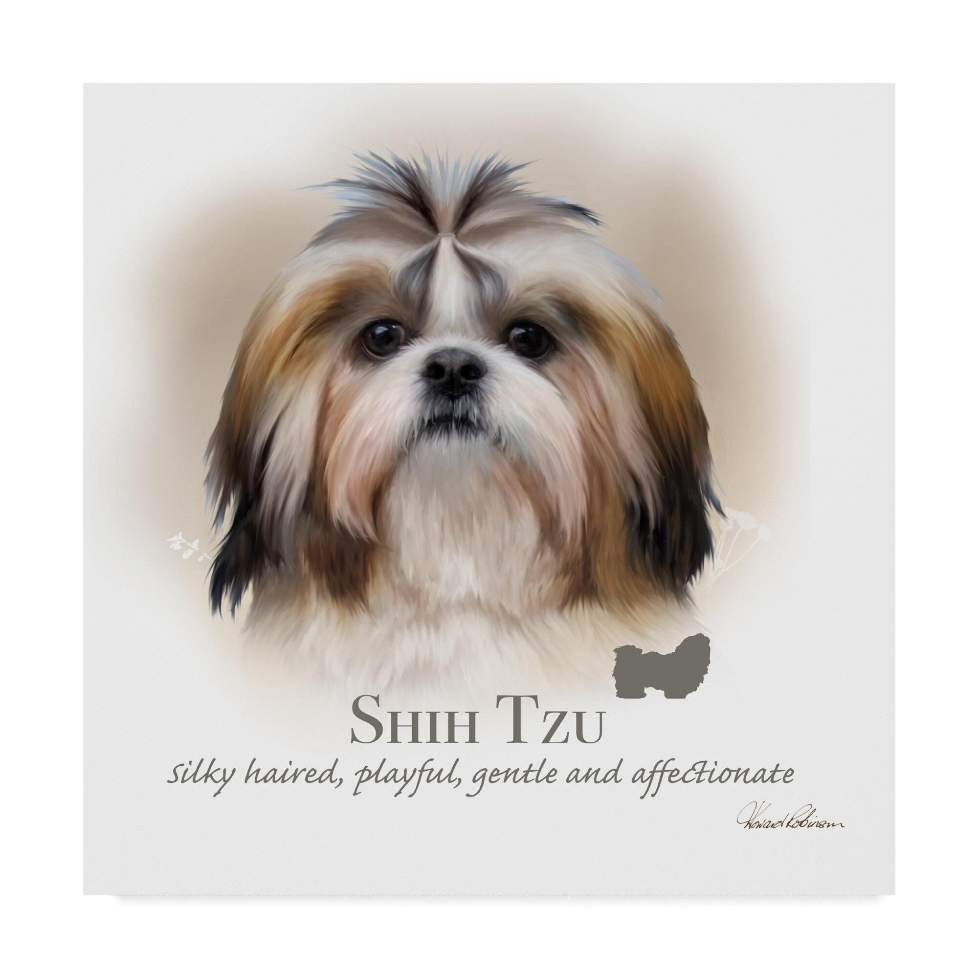 Shi Tzu Fine Art Print