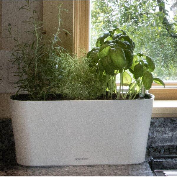 Azalea Self - Watering Plastic Pot Planter by Ebern Designs