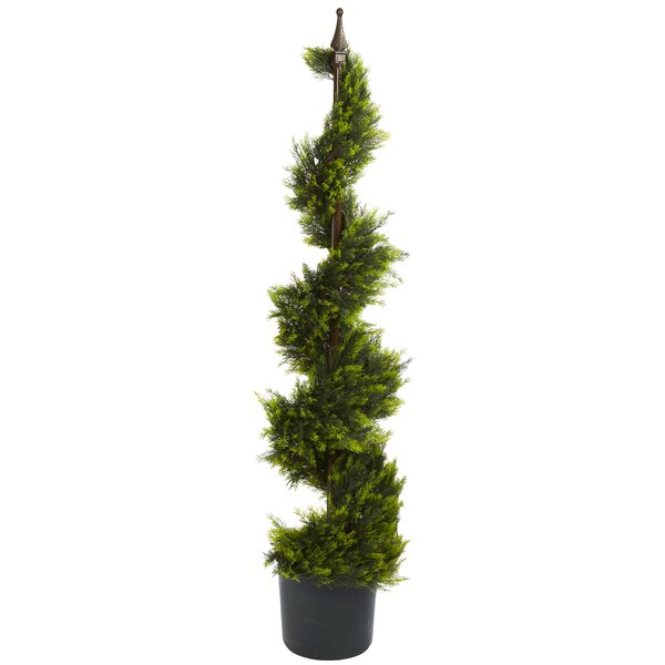 Cypress Spiral Topiary with Pot by Darby Home Co