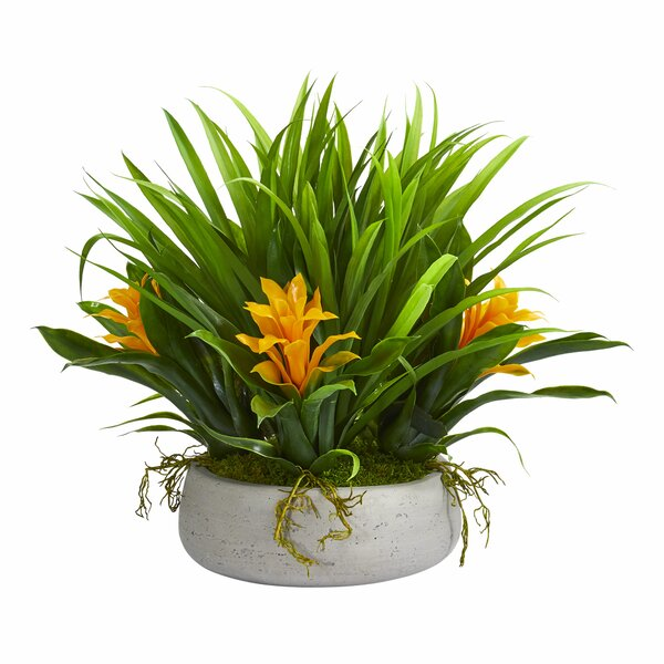 Bromeliad and Grass Desktop Flowering Grass in Planter by Wrought Studio