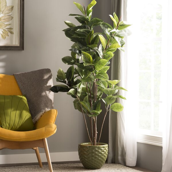 Rubber Foliage Tree in Pot by Darby Home Co