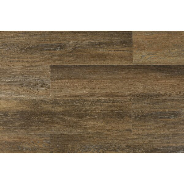 Aditya  8 x 71 x 12mm Laminate Flooring in Veneto by Serradon