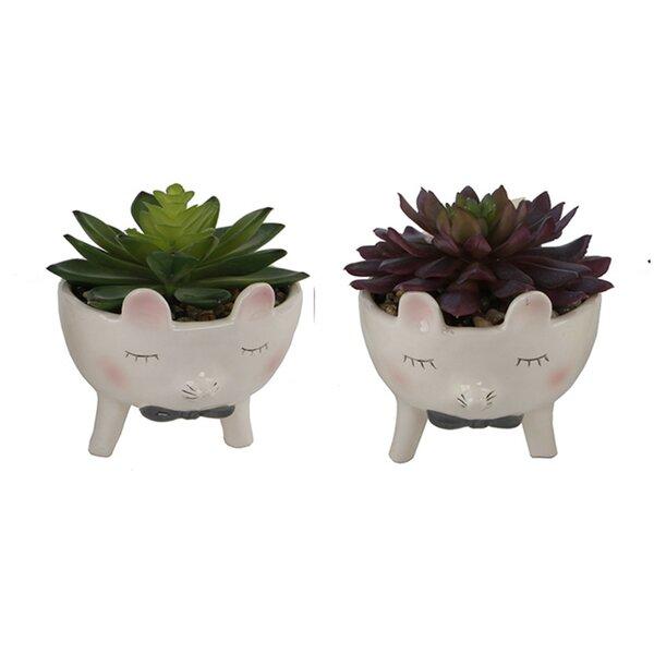 2 Piece Mouse with Bow Tie Succulent Desktop Plant in Pot Set by Ebern Designs
