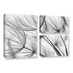'Parachute Seed I' by Cora Niele 3 Piece Photographic Print on Canvas Set by ArtWall