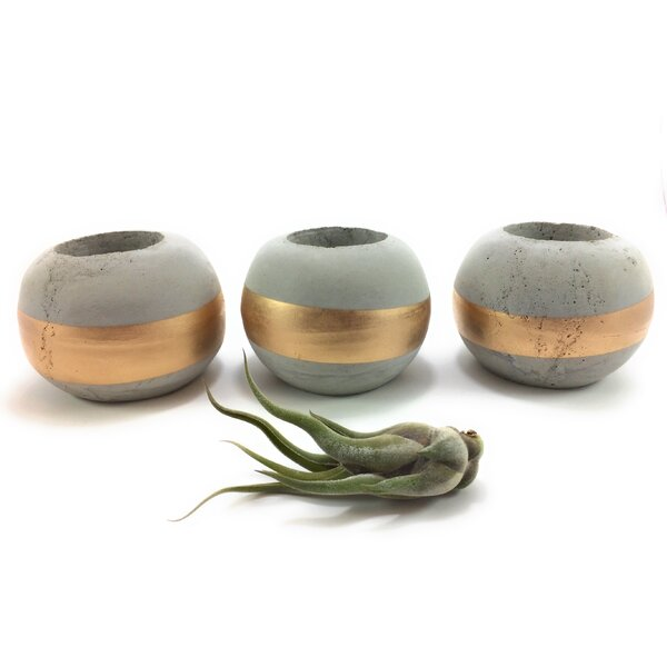 Baumer Succulent Plant Concrete Pot Planter (Set of 3) by Ivy Bronx