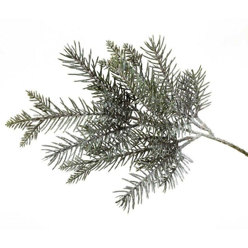 balsam fir