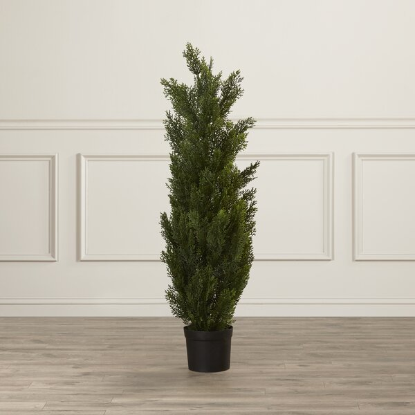 Cedar Tree Round Tapered Topiary in Pot by Darby Home Co