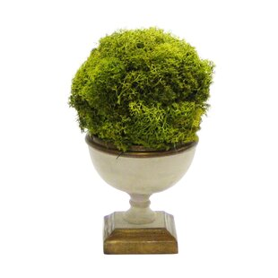 Ball Moss Topiary in Urn