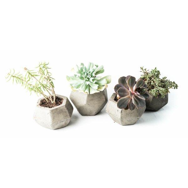 4-Piece Composite Pot Planter Set by My Spirit Garden