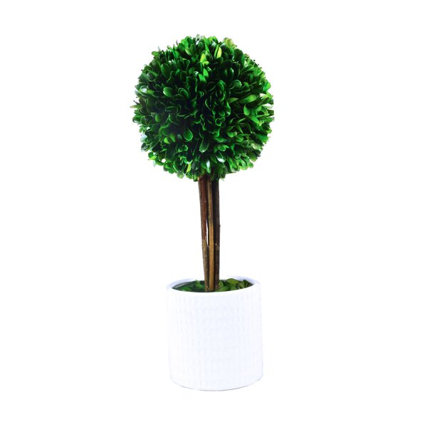 Tower Desktop Boxwood Topiary in Planter by GT DIR