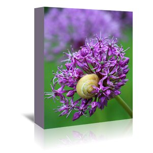 Purple Allium Flower Photographic Print on Wrapped Canvas by East Urban Home