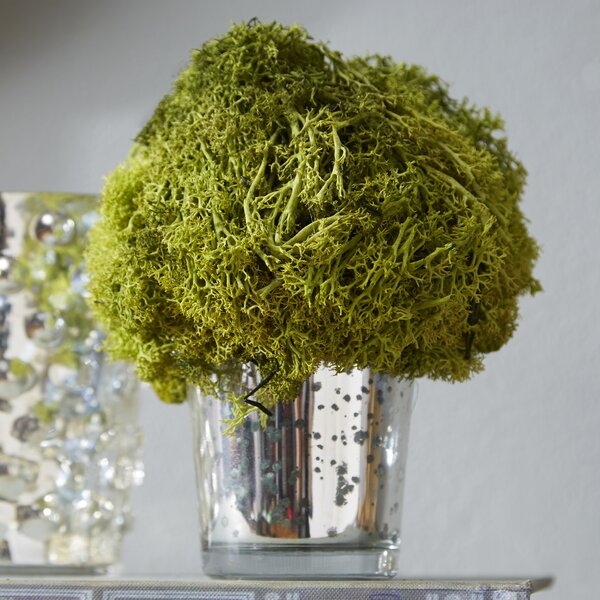 Preserved Reindeer Moss Topiary by Bougainvillea