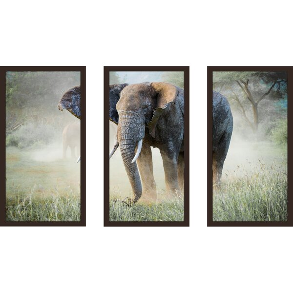 Elephant 3 Piece Framed Photographic Print Set by Picture Perfect International