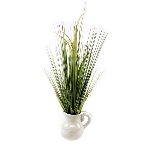 Desktop Onion Grass in Pot by Highland Dunes