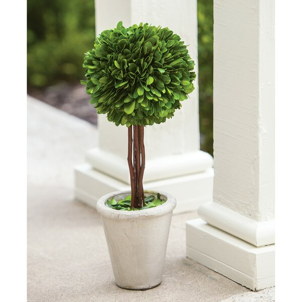Floor Boxwood Topiary in Pot by Charlton Home