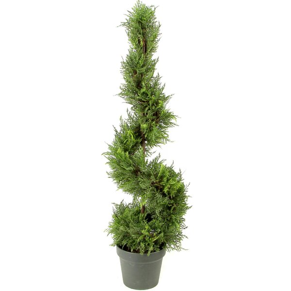 Cypress Leaf Spiral Floor Boxwood Topiary in Pot (