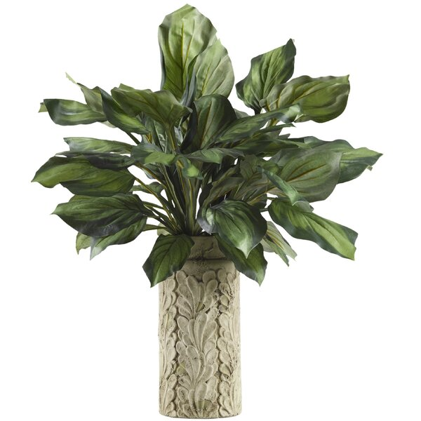 Hosta Foliage Plant in Decorative Vase by August Grove