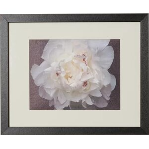 'Perfect Peony' Framed Photographic Print by Willa