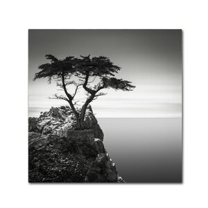 The Lone Cypress by Dave MacVicar Photographic Print on Wrapped Canvas by Trademark Fine Art