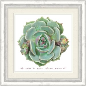 'Be Still And Know Succulent' Framed Graphic Art Print on Paper by Bungalow Rose