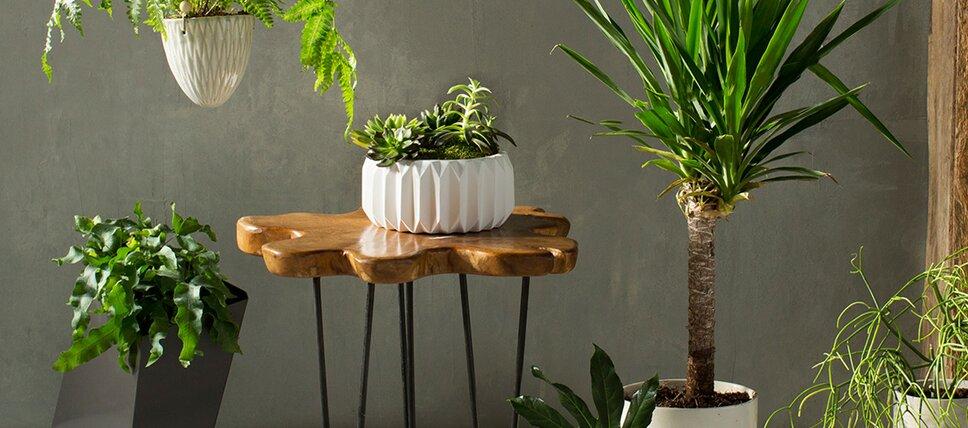 Indoor + Outdoor Planters