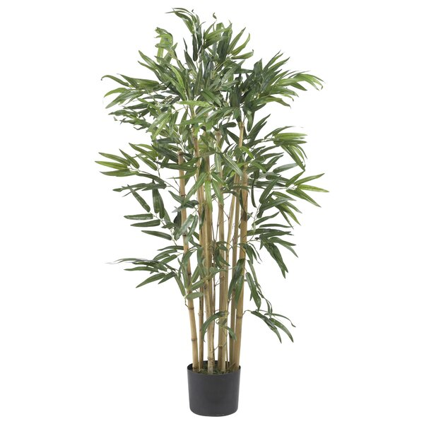Multi Bambusa Bamboo Tree in Planter by Mistana