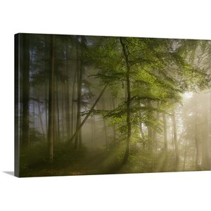 'Morning Beauty' by Norbert Maier Photographic Print on Canvas by Great Big Canvas