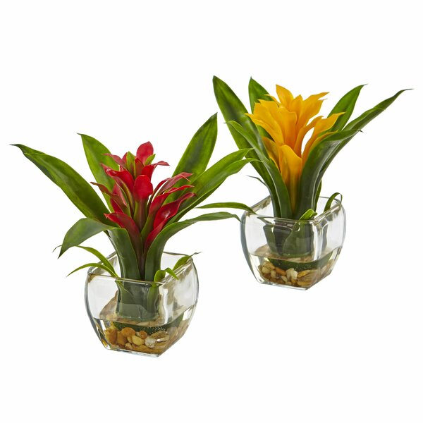 Leroy 2 Piece Bromeliad Arrangement in Vase Set by Nearly Natural