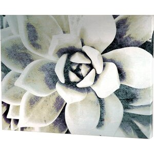 Blue Succulent Painting Print on Wrapped Canvas by Bungalow Rose